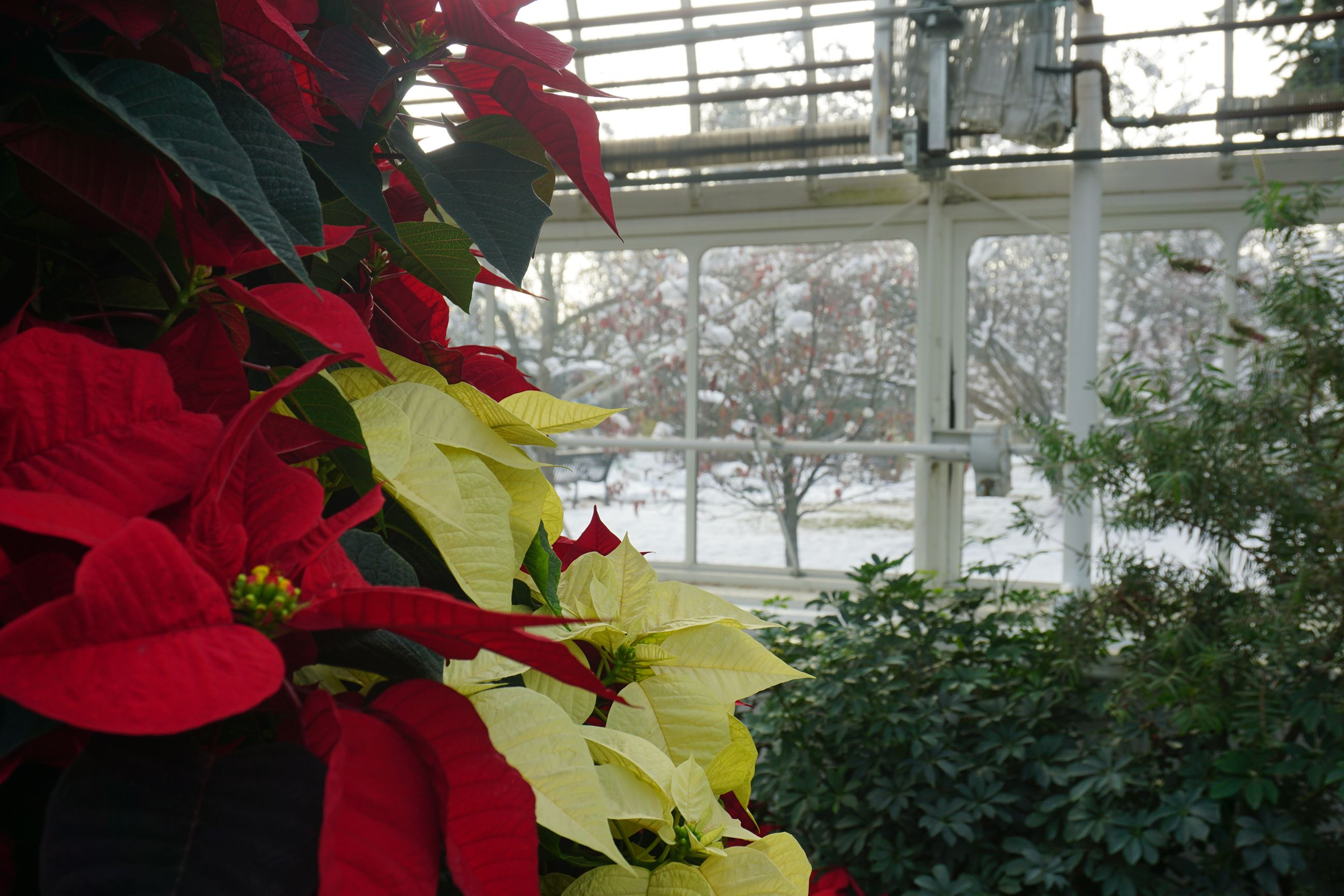 Wilder Park Conservatory Holiday Show